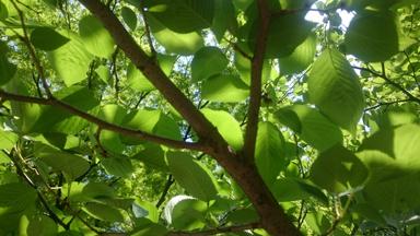 green5gatu